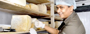 Jezeem Jameel: A Cheese Maker in Kandy