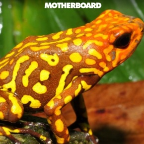 A lesson from Colombia: how to defeat exotic frog smugglers